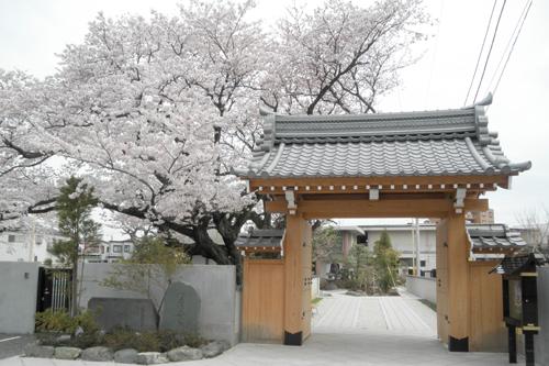 在りし日の桜の姿